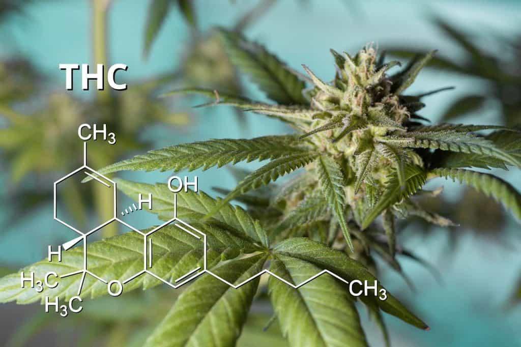 Que es el THC?